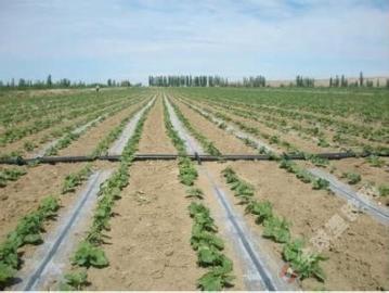 蔬菜大棚滴灌设备_大棚蔬菜膜下滴灌技术,蔬菜滴灌,滴灌价格,低价滴灌带 - 全球塑胶网