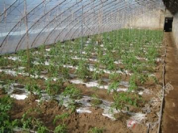 蔬菜大棚滴灌设备_滴灌设备,滴灌价格,大棚滴灌,蔬菜滴灌 - 全球塑胶网