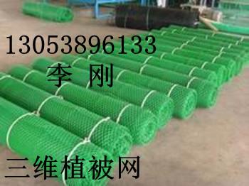 三维植被网保护护坡(保护植被)