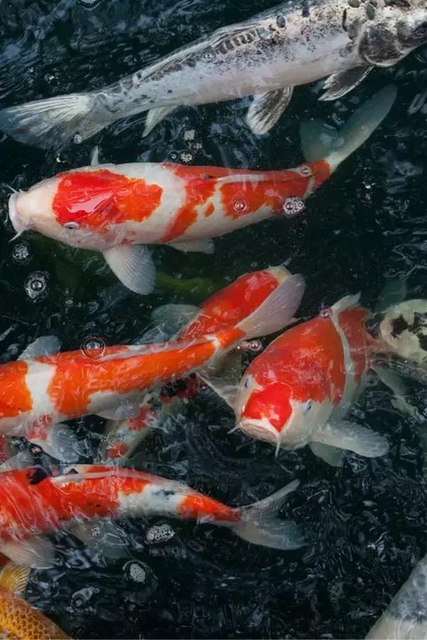 忻州卡利净鱼池过滤器
