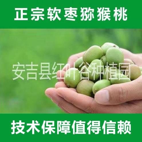 软枣猕猴桃种苗  奇异莓种苗,软枣猕猴桃种苗,奇异莓种植,