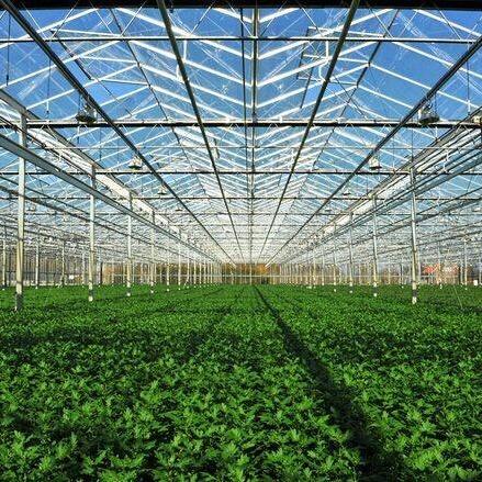 温室蔬菜大棚一亩大棚定价多少