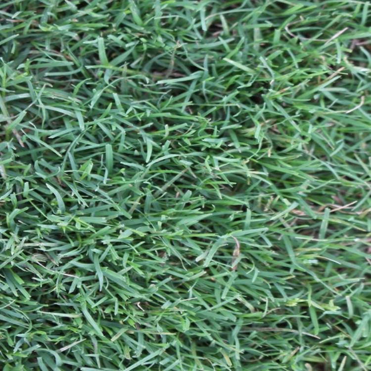 许昌批发护坡草种
