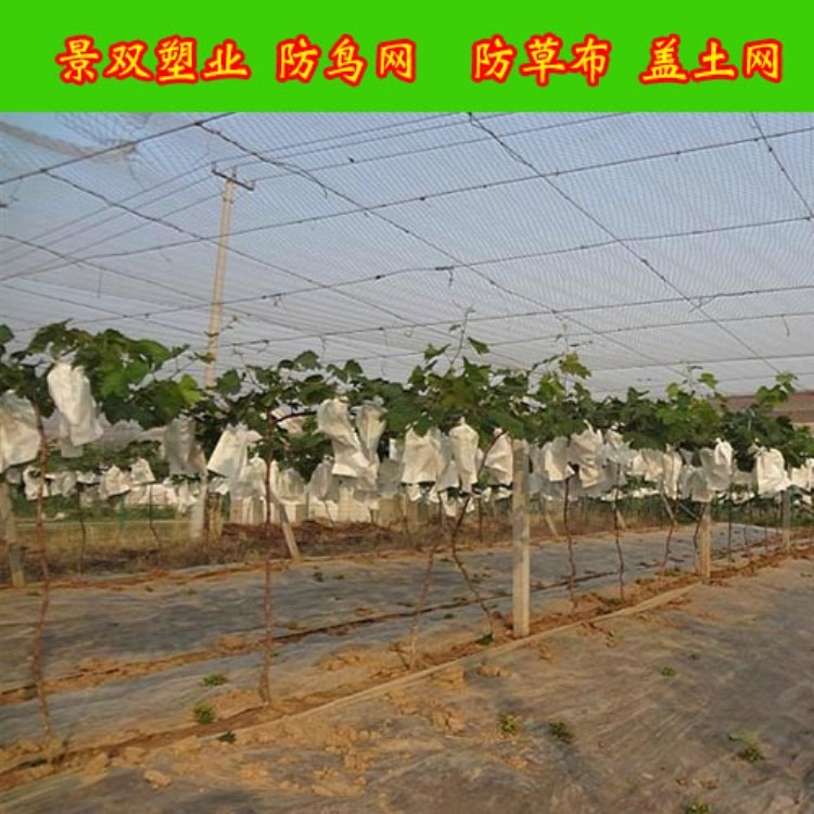 果园防鸟网|葡萄园防鸟网|葡萄防鸟网