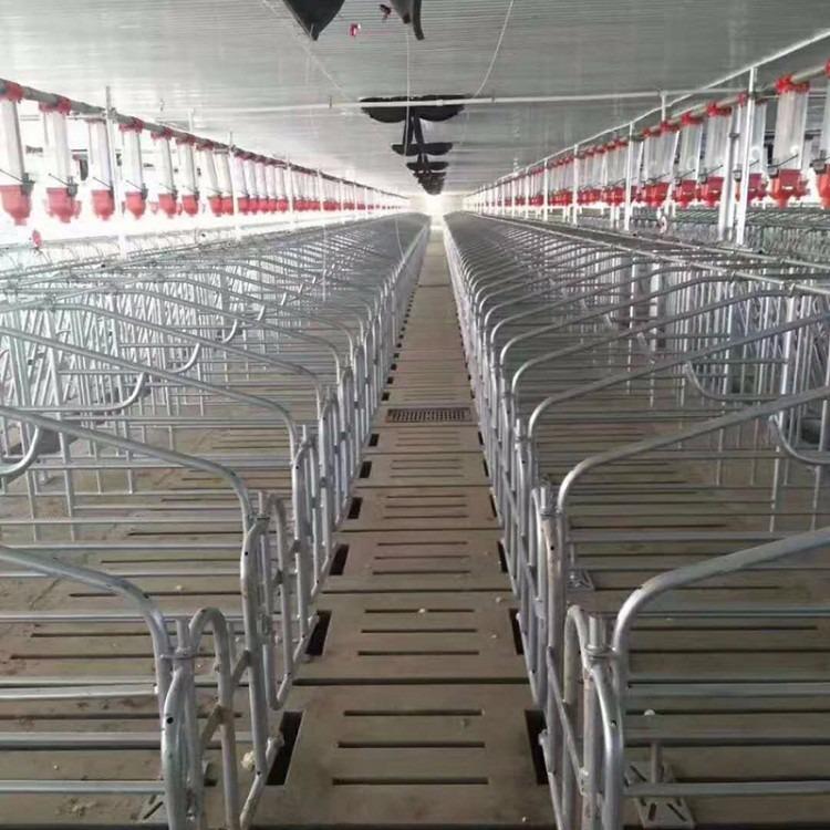 母猪定位栏新乡厂家批发价格直销