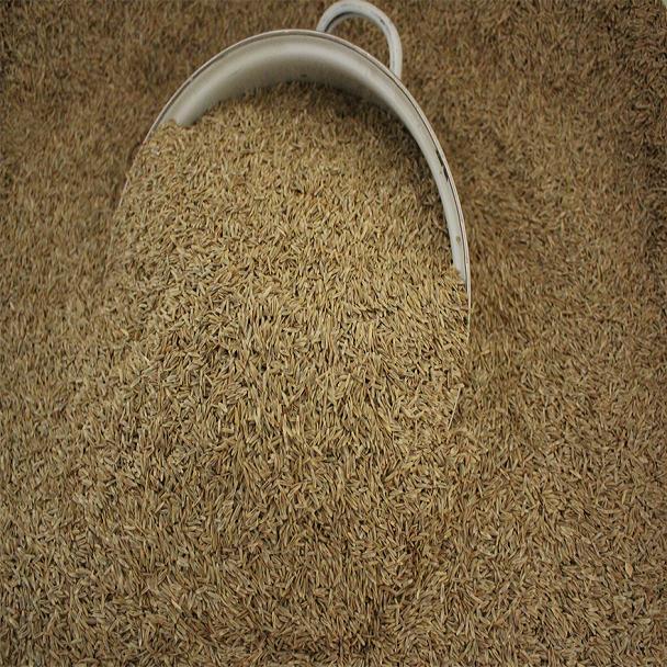 野花草种子批发市场,批发进口苜蓿草种子