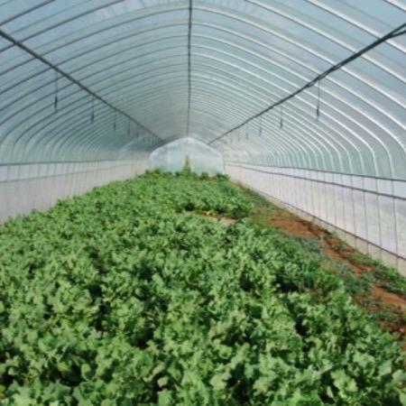 【建源】厂家承接 各式各样的农业温室大棚 质量保证