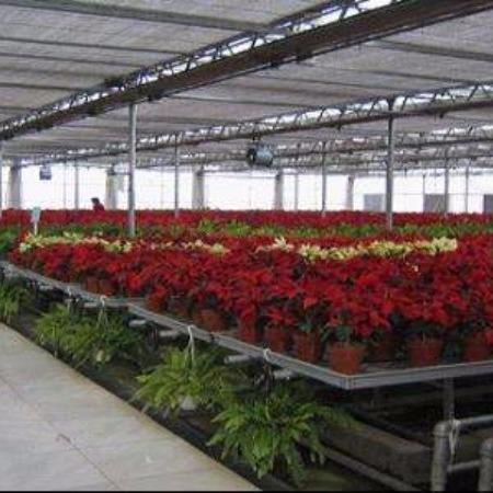 郑州花卉大棚厂家 郑州花卉大棚建设 郑州花卉大棚价格