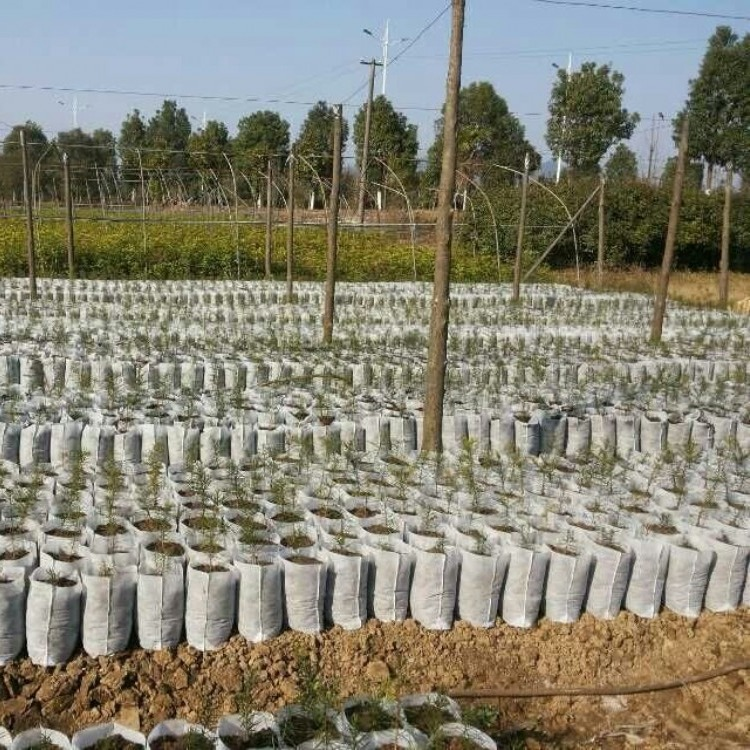 林海环保无纺布育苗袋 可降解加厚育苗袋