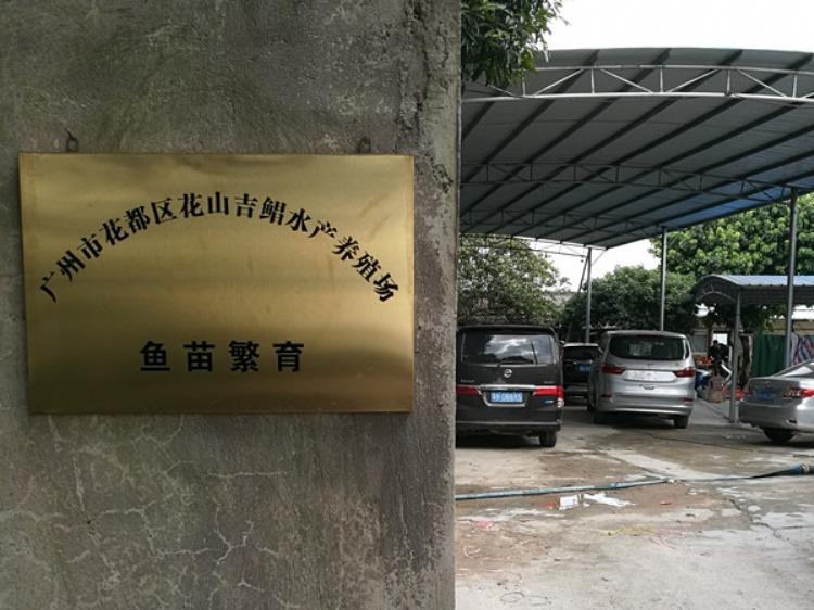 广州市花都区花山吉鲳水产养殖场