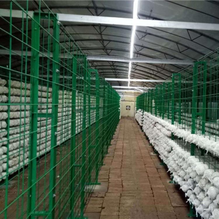 种植蘑菇网架价格蘑菇网架厂家