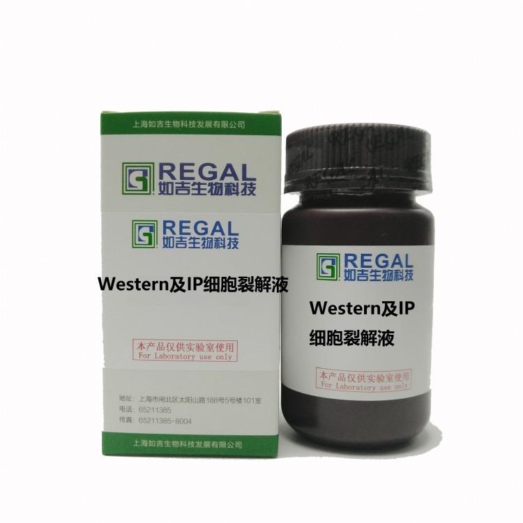 Western及IP细胞裂解液