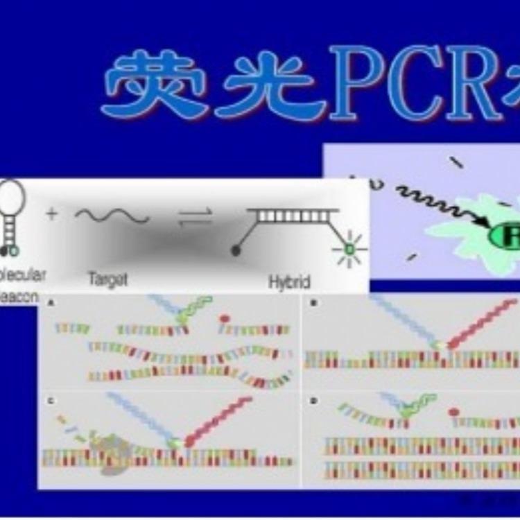 副百日咳波氏杆菌PCR试刘盒多少钱