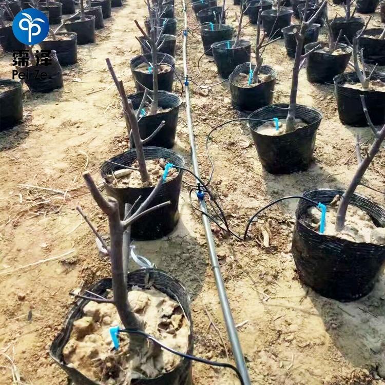 农业滴灌节水滴箭产品介绍
