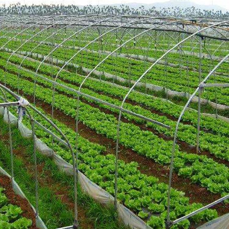 建源温室出品 蔬菜大棚 温室大棚各种温室工程长期建造