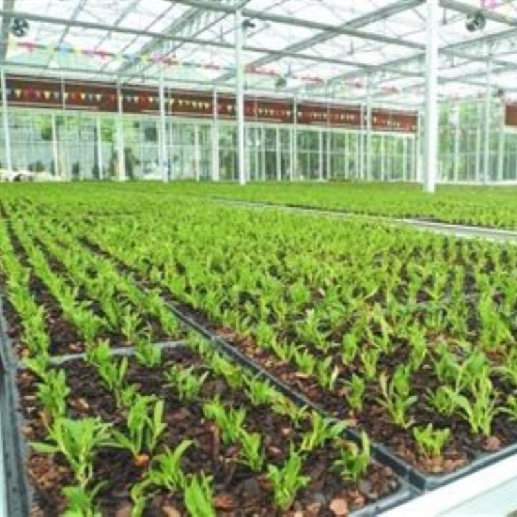 建设厂家 蔬菜大棚 温室大棚 建源温室精准设计安装