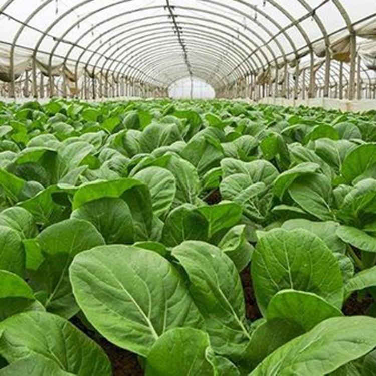 建源温室 厂家搭建各种款式蔬菜大棚 温室大棚