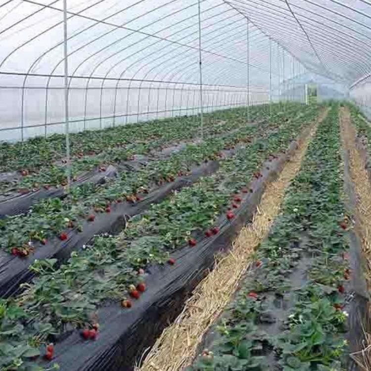 厂家搭建蔬菜大棚 温室大棚 建源温室 质量保固