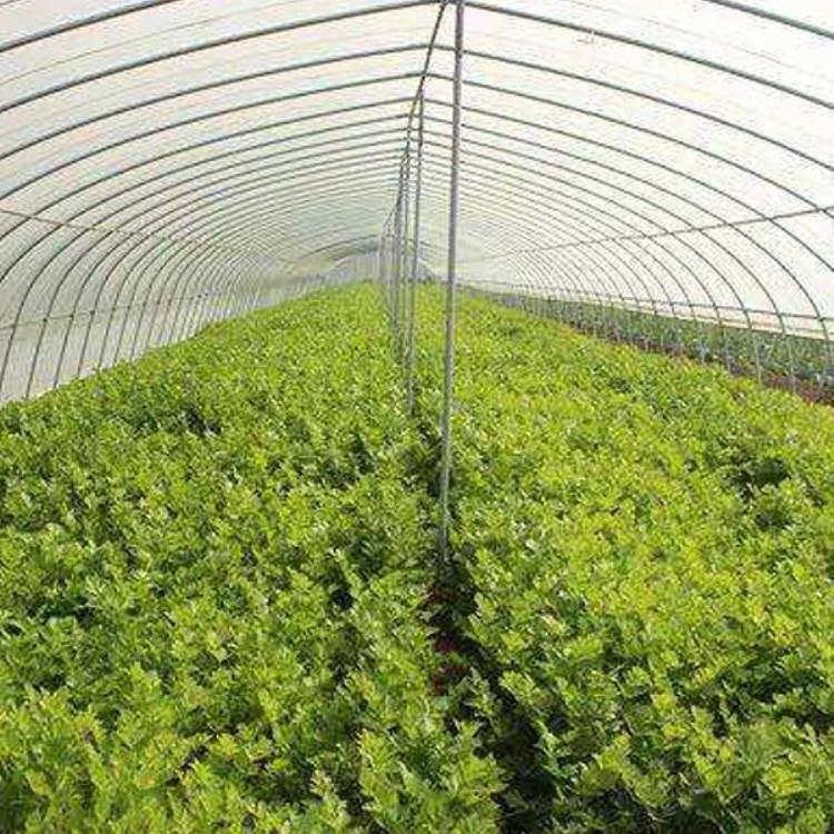 建源温室制造蔬菜大棚 温室大棚 质量检测专业安装