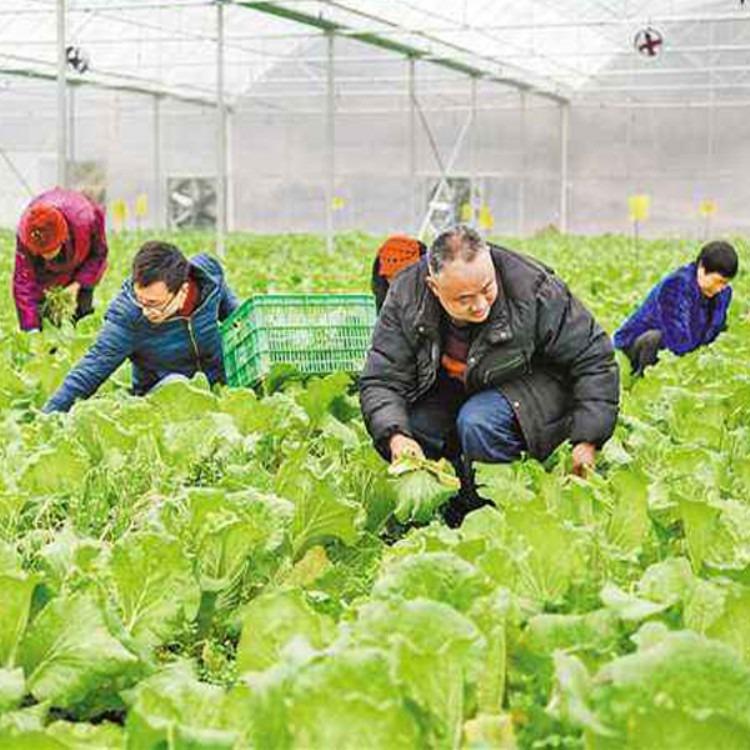 厂家安装 蔬菜大棚 温室大棚 建造各种温室大棚  建源温室