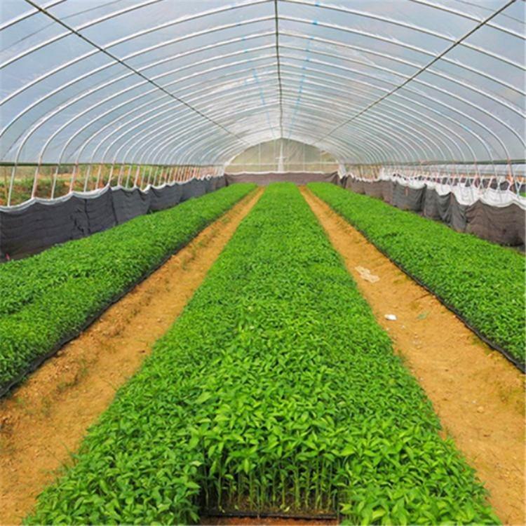 定制厂家 蔬菜大棚 温室大棚 建造各种温室大棚  建源温室