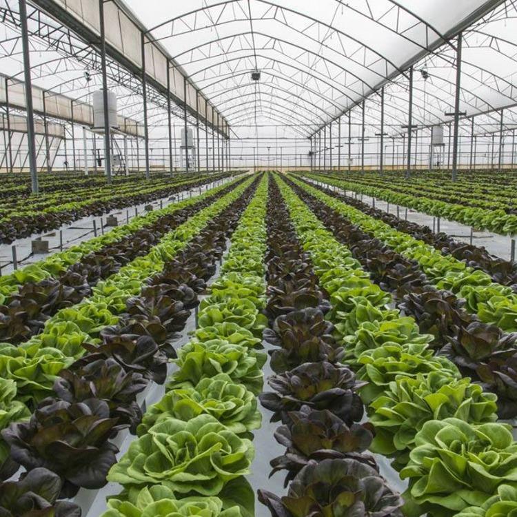 搭建蔬菜大棚 温室大棚 建源温室厂家建造
