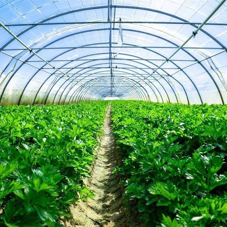 连栋大棚 大棚温室工程 建造温室大棚 建花卉大棚