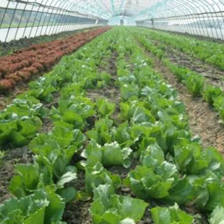 正规厂家承包 蔬菜大棚 温室大棚工程 建源温室