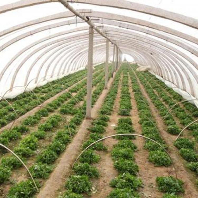 各种款式蔬菜大棚 温室大棚工程 建源温室专业搭建