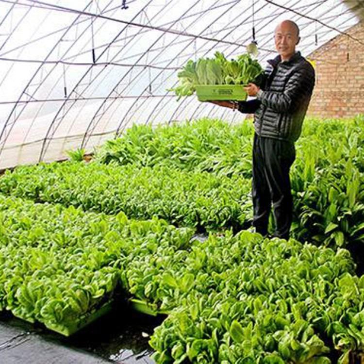 建造厂家建源温室 各种温室大棚工程 蔬菜大棚专业测量设计搭建