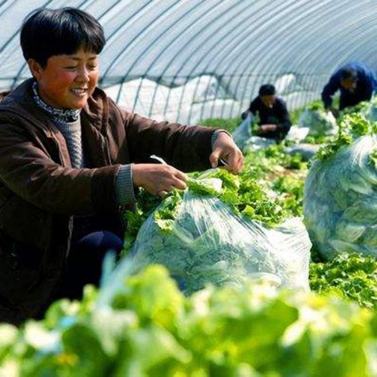 建源温室厂家承接各种温室大棚工程 蔬菜大棚