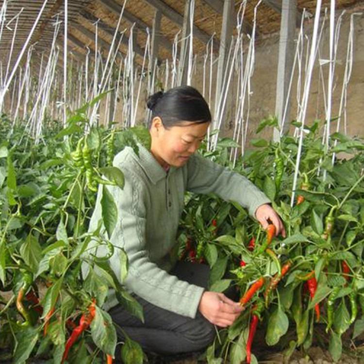 搭建蔬菜大棚 温室大棚 建源温室长期专业建造