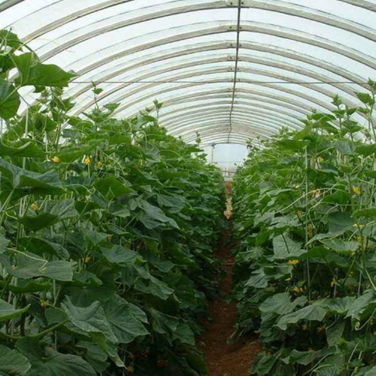 厂家建源温室承接蔬菜大棚 温室大棚工程 款式牢固质量保证