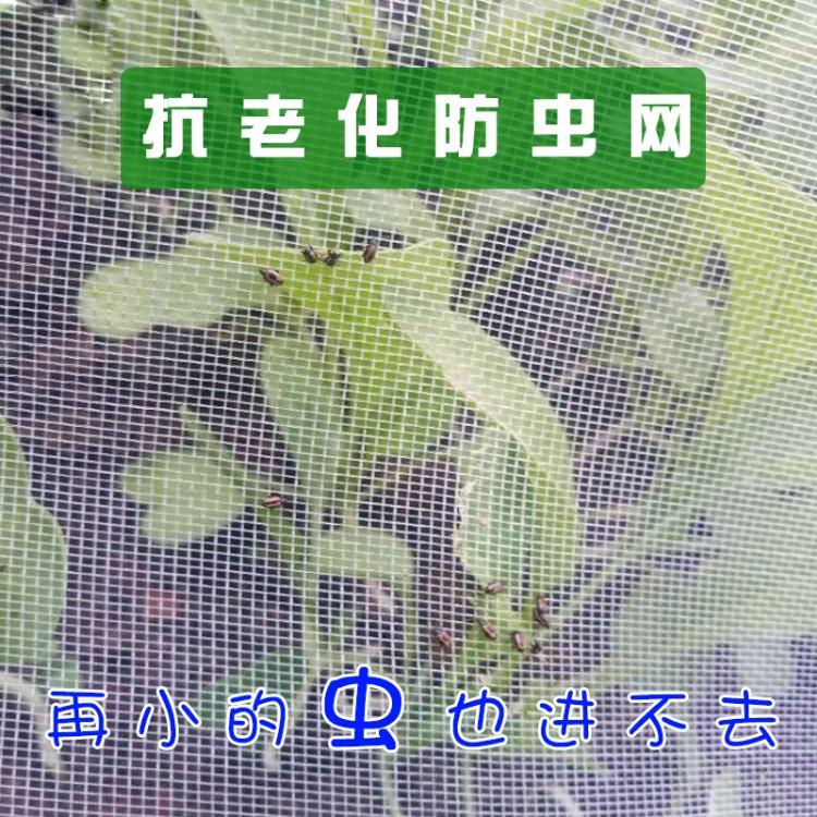 白色聚乙烯防鸟网 葡萄园 果园防鸟网 尼龙防鸟网 枸杞防鸟网