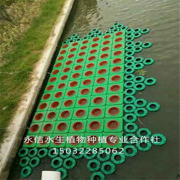 永信水生 生态浮岛作用 生态浮岛每平方米可消减氨氦量