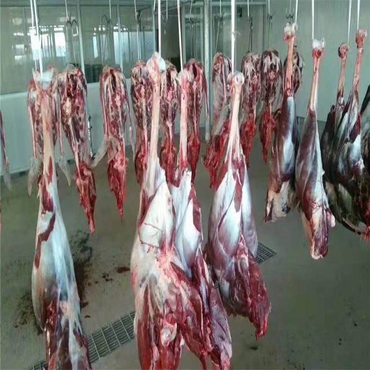 出售新鲜鸵鸟肉 新鲜鸵鸟蛋价格 鸵鸟肉厂家