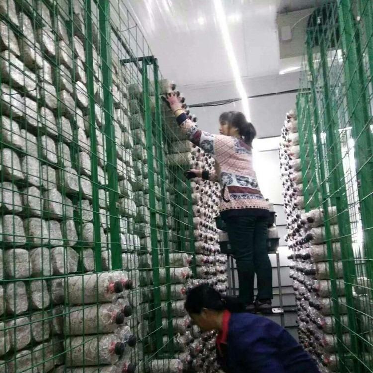 供应温室种植食用菌网格架生产厂家