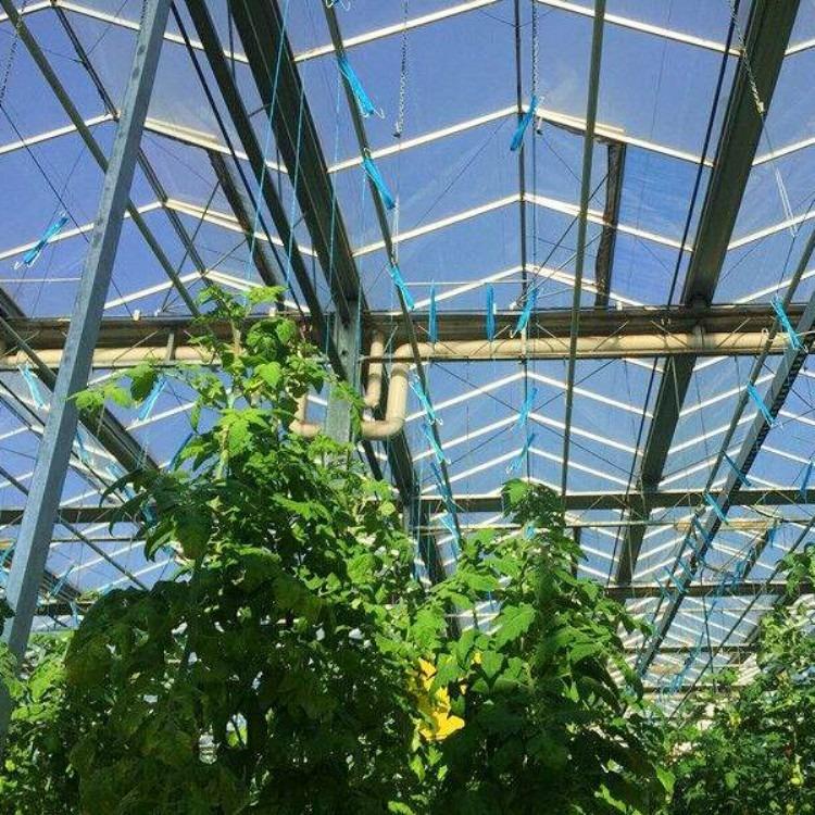 长期搭建蔬菜大棚 温室大棚 建源温室制造