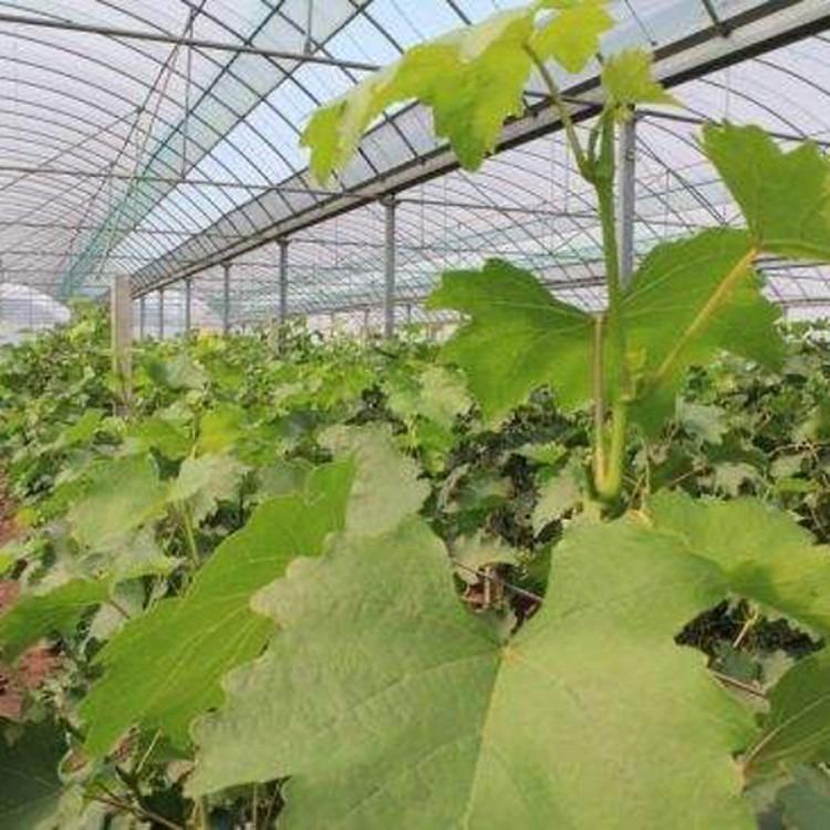 承包蔬菜大棚 温室大棚建设工程 建源温室