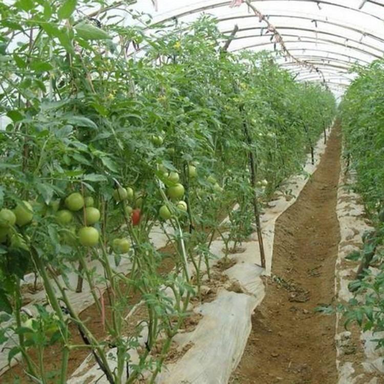 建源温室厂家搭建 温室大棚 蔬菜大棚 欢迎考察