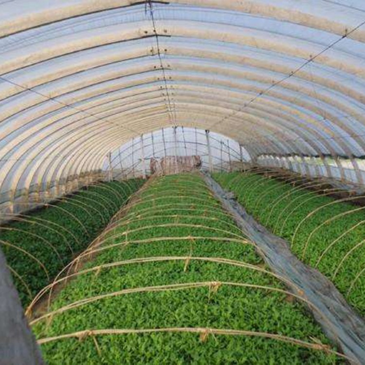 正规厂家建造 蔬菜大棚 温室大棚 建源温室 出图纸快
