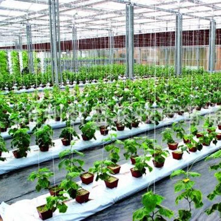 厂家 建源温室  搭建蔬菜大棚 温室大棚 大棚钢质结构骨架