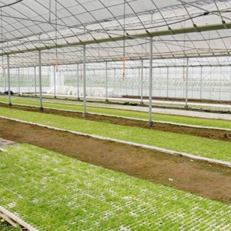 建源温室专业定制蔬菜大棚 温室大棚