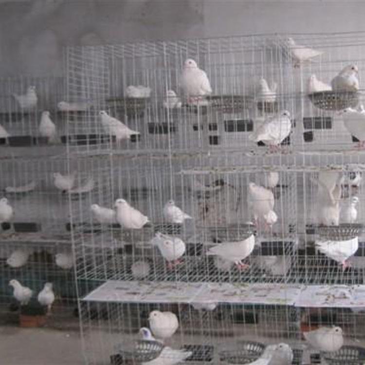 厂家长期出售鸽笼现货三层/四层鸽笼镀锌铁丝网笼具质量保证