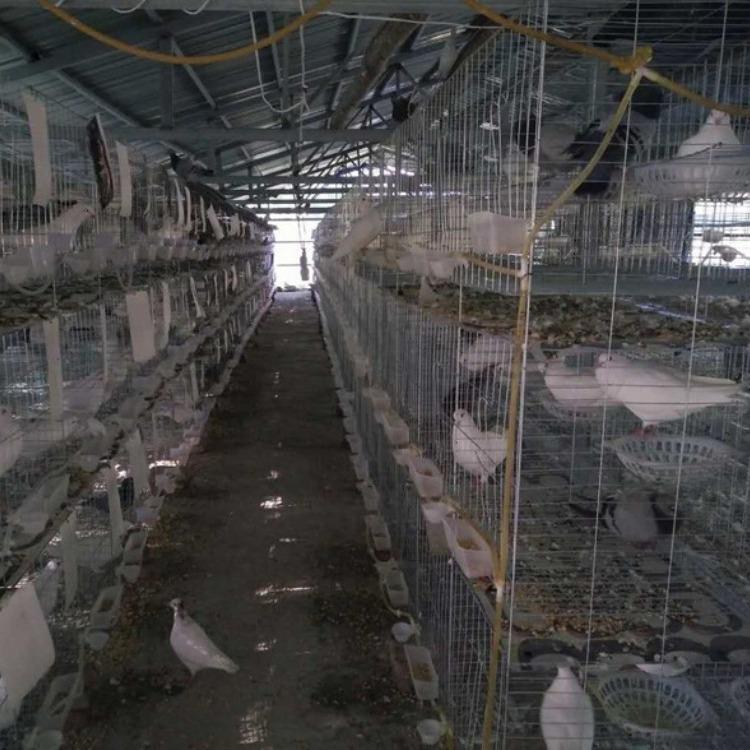 镀锌鸽笼厂家批发三层鸽笼四层鸽笼规格齐全