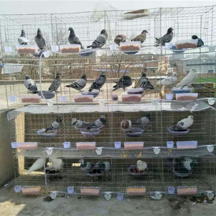 三层/四层镀锌鸽子笼养殖场鸽笼厂家出售鸽笼配件